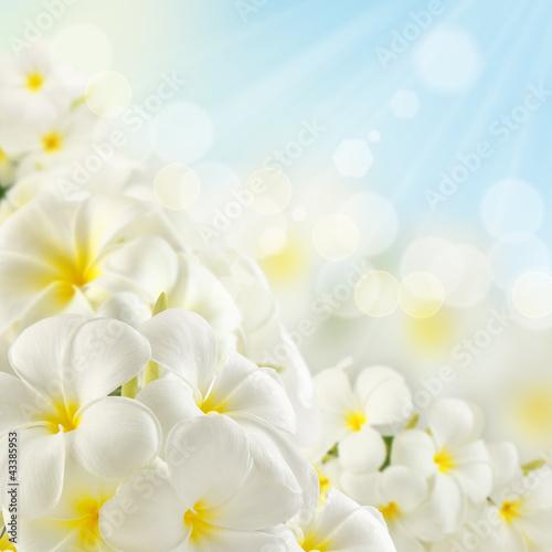 Keuken foto achterwand Frangipani Bouquet of plumeria flowers