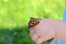 Painted Lady Butterfly On Childs Hand
