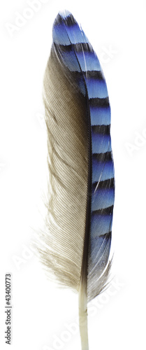 Cuadros en Lienzo Jay Feather