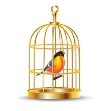 Golden Bird Cage With Bird Inside