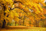 Fototapeta Krajobraz - Autumn / Gold Trees in a park