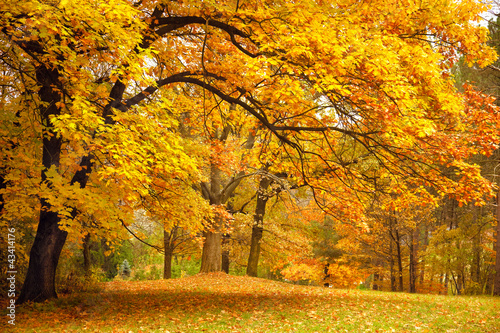 Tuinposter Honing Autumn / Gold Trees in a park