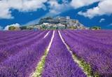 Lavande en Provence, village provençal en France - 43444999