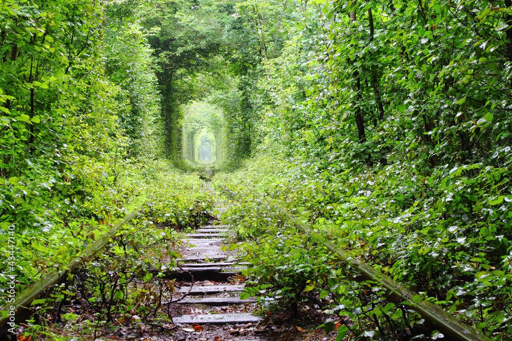 Tunel Miłości <span>plik: #43447140 | autor: tverkhovinets</span>