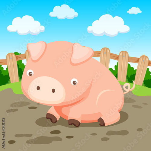 Poster Ranch Pig in farm
