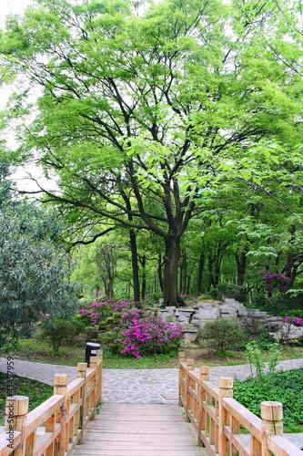 krajobrazy-chinskiego-parku-miasto-changsha-chiny-sa