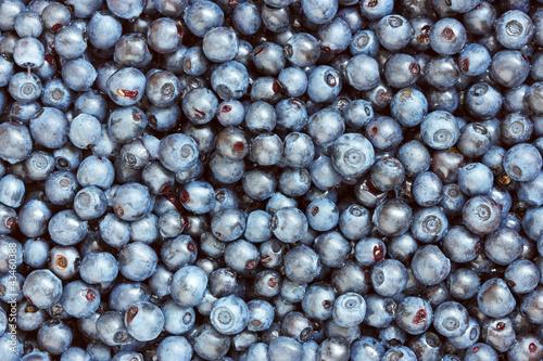 Fototapety, obrazy: background of freshly picked blueberries