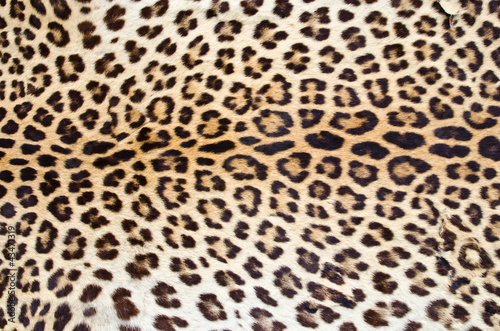Door stickers Leopard Tiger fur 01