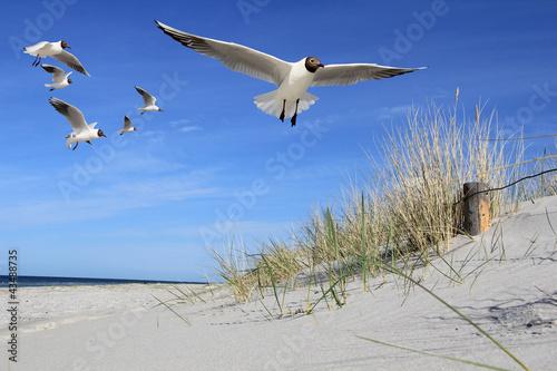 Foto-Schiebegardine Komplettsystem - Möwen am Strand