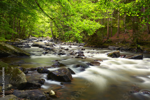 Fototapety, obrazy: Mountain River in the wood