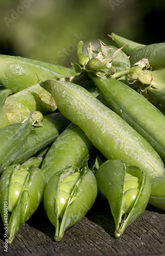 Pile of peas - portrait