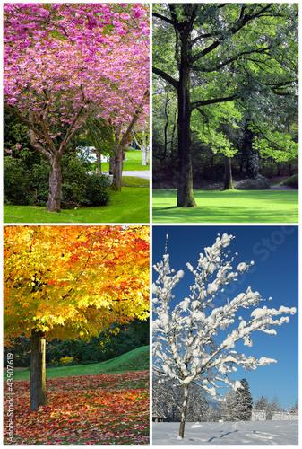 Four seasons - 43507619