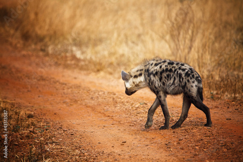 Deurstickers Hyena hyena back view