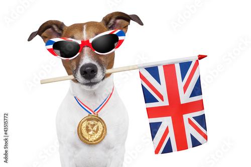Fototapety, obrazy: olympic dog