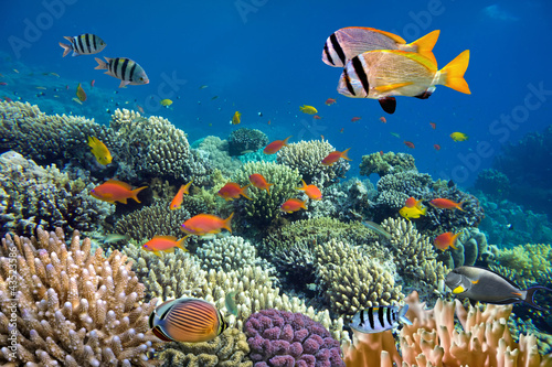 Poster Sous-marin Underwater shoot of vivid coral reef with a fishes