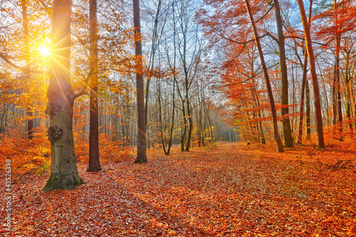 Fotobehang Baksteen Sunset in autumn forest
