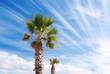 palm on the beach with sun beam