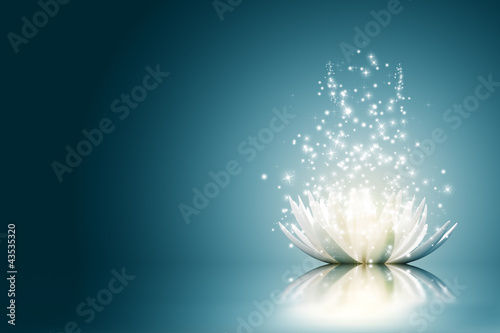Lotus flower #43535320