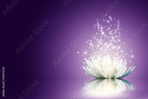 Lotus flower #43535322