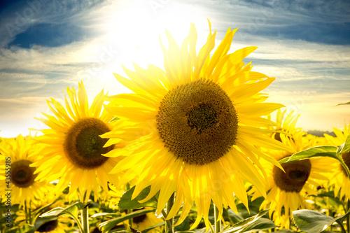 Garden Poster Floral Sonnenblumen im Sonnenlicht