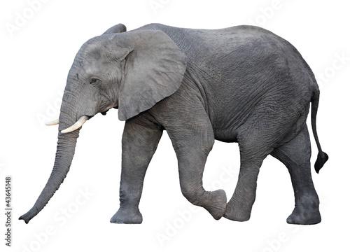 Photo  elephant