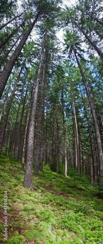 Garden Poster Forest Coniferous forest