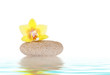 Wellnes concept - stone with yellow orchid isolated over white