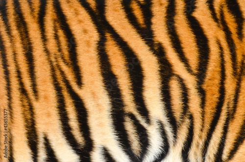 Spoed Foto op Canvas Tijger tiger skin