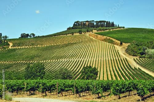Fotografiet  I vigneti del Chianti - Toscana