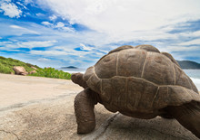 Giant Turtle On Road