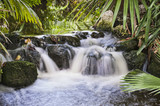 Waterfall in Tropical Stream