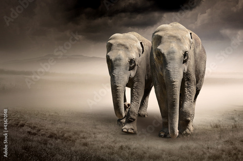 Photo  Pair of elephants in motion