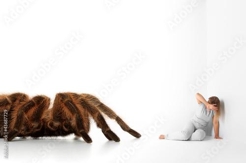 Spinnenangst - Arachnophobie Wallpaper Mural