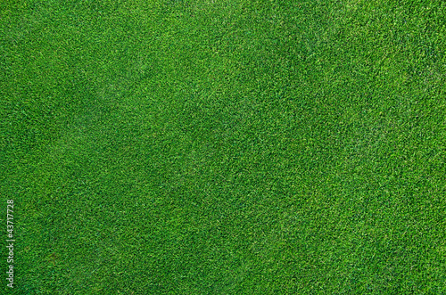 Perfect Golf Green - 43717728