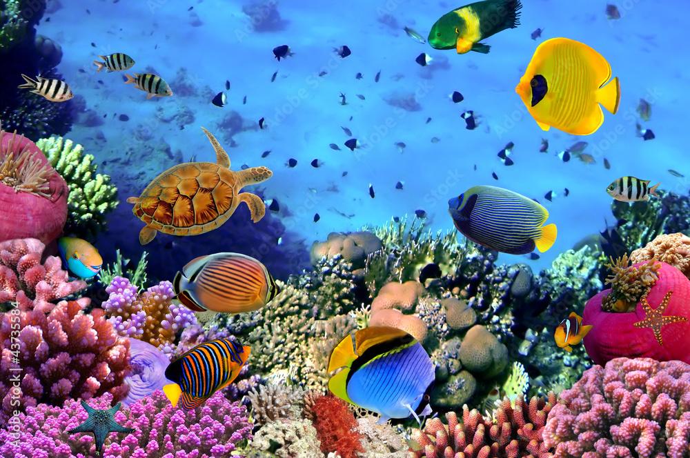 Zdjęcie koralowej kolonii <span>plik: #43735584   autor: vlad61_61</span>