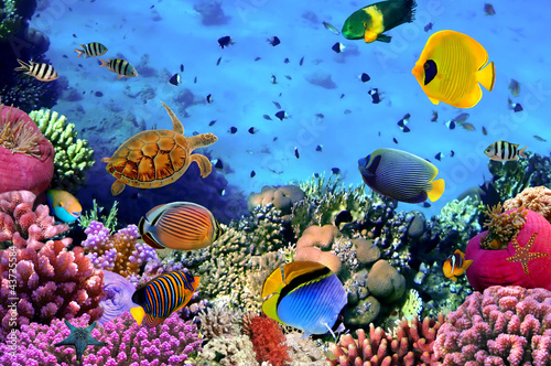 Spoed Foto op Canvas Onder water Photo of a coral colony