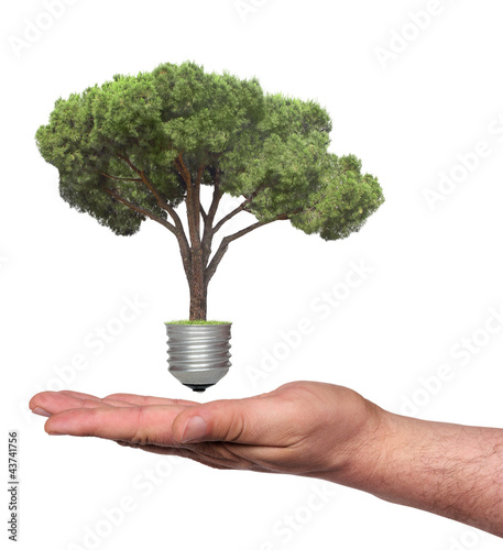 Foto op Canvas Natuur pine growing from the base of the light bulb and hand