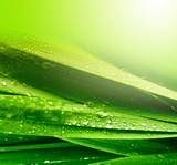 grass leaf with water drops