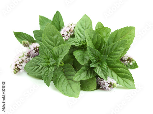 Obraz Fresh mint on a white background - fototapety do salonu