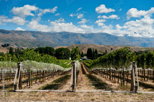 Foto op Plexiglas Nieuw Zeeland Vineyard in Central Otago, New Zealand