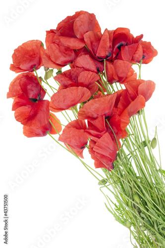 wild field  poppies bouquet