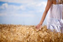 Woman's Hand Touching Wheat
