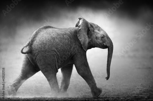 mlody-slon-w-biegu