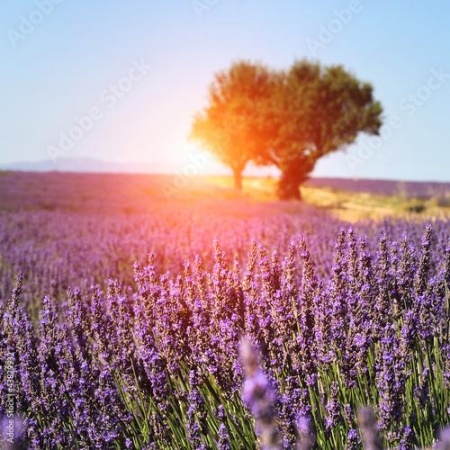 Foto-Schiebegardine ohne Schienensystem - Lavender field in Provence, France