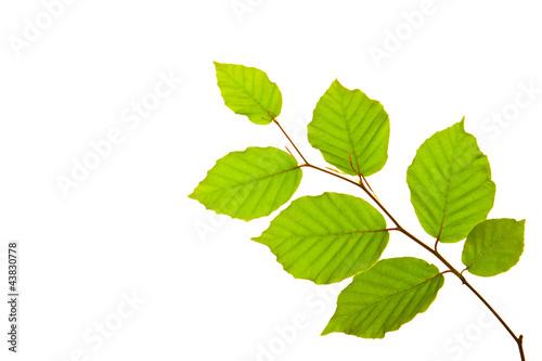 Fotografia  Blätter,Hintergrund