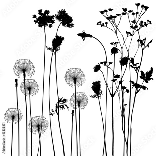 collection, for designers, plant vector - 43835871