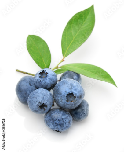 Fotografía  Close up of a blueberry twig