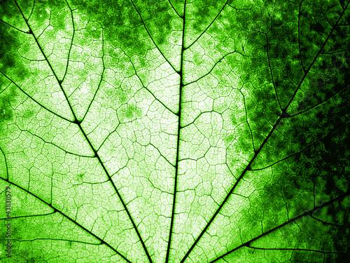 makro-zielony-lisc-klonu