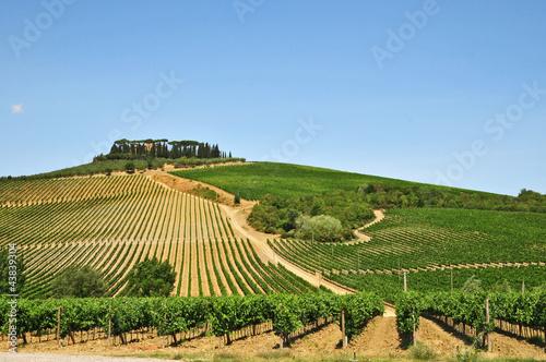 Canvastavla I vigneti del Chianti - Toscana