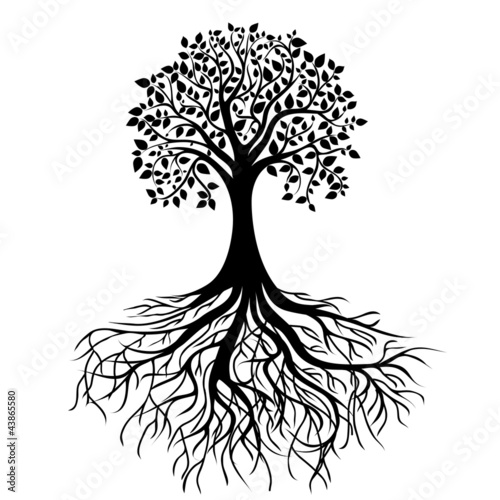 Foto  Tree with roots